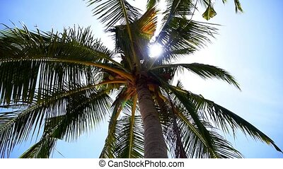 Green Palm on the Sunny Beach of the Exotic and Tropical Island.