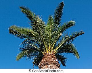 Green Palm Plants Vegetation