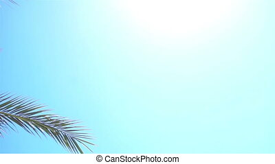 Green Palm tree amid the boundless blue sky with sunshine -...