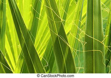 green palm tree detail