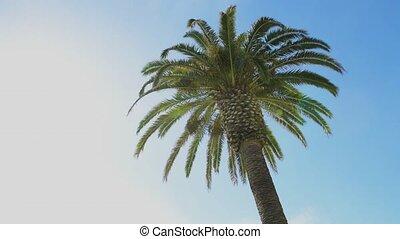 Green palm tree leafs on blue sky