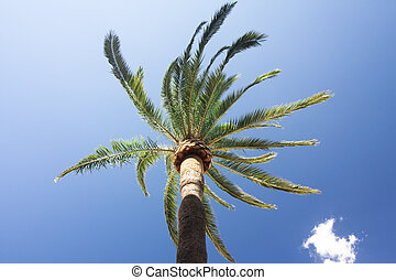 Green palm tree on blue sky background.