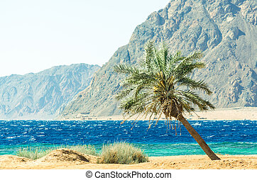 palm tree on the Red Sea on the background of high rocky cliffs in Egypt