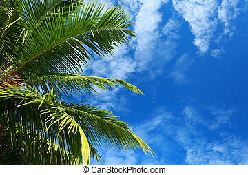 Green palm tree over blue sky in Andamans Island, India.