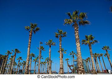 Green palm trees, blue background of sky, street of Baercelona