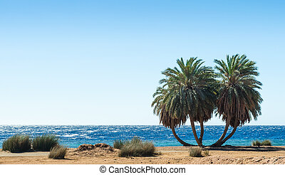 green palm trees on the Red Sea in Egypt