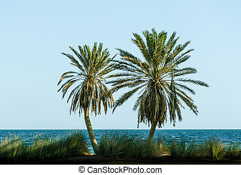 green palm trees on the Red Sea on the background of a clear sky in Egypt Dahab