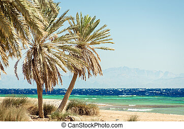 palm trees on the Red Sea on the background of high rocky cliffs in Egypt