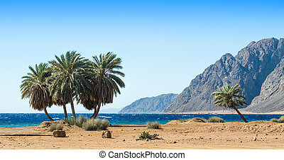 green palm trees on the shore of the Red Sea against the backdrop of the high rocky mountains in Egypt