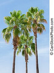 Green palms on the blue sky background.