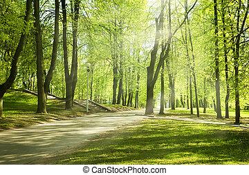 Green park in sunny morning