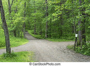 Green Park Pathway - Crossroads - Beautiful path in a green...