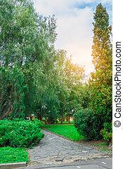 Green park tree outdoor