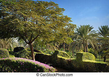 green park with palm trees and blue sky