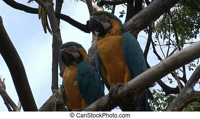 Green parrot Ara birds on water of Galapagos Islands.