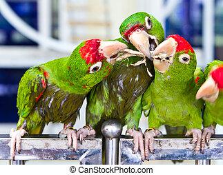 green parrot bird eating