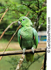 Green Parrot on a Branch