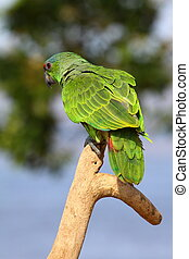 Green Parrot over natural background