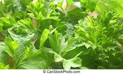 Green parsley leaves close up dolly video clip