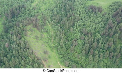 Green pasture and forest tree, viewed from above, summer ...