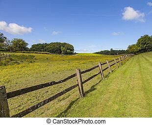 Image of fresh green pasture on farm. Sweden.