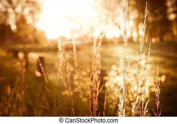 morning light - green pasture in the morning light