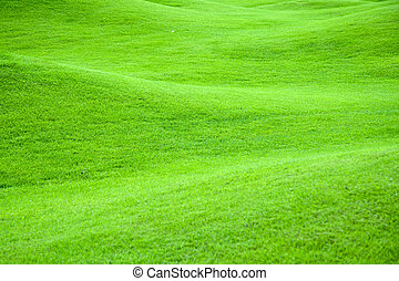 Hilly field of bright green grass