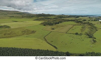 Green pastures, fields at pine forest aerial. Nobody nature landsape. Countryside farmland fields