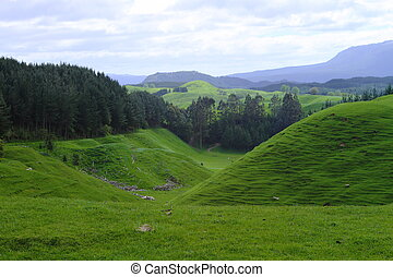 Green pastures - Green beautiful meadows with rolling hills...