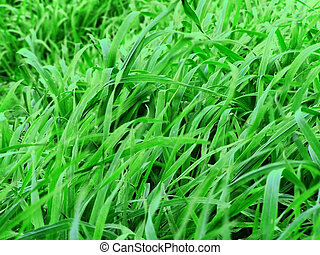 Green Pastures - Green grass, pastures and weeds