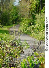 Green Path 2