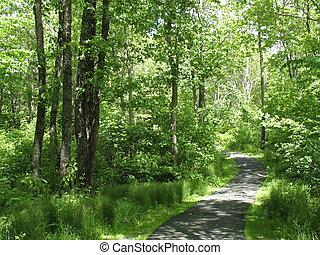 Green Pathway - Walking path through urban park
