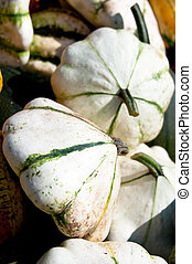 Green Patty pan Squash