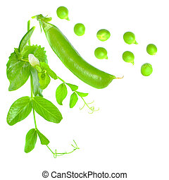 Green pea with leaves isolated on white background