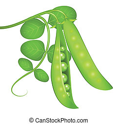 Green peas and the plant