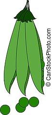 Green peas, illustration, vector on white background.
