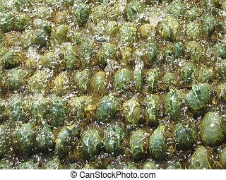 green pebbles under water