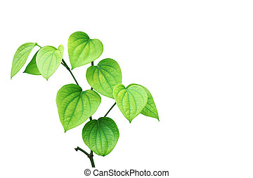 Green pepper plant on white background.