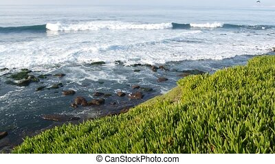 Green pigface sour fig succulent over pacific ocean ...