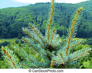 detailed view of a pine in a mountain scenary