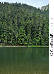 Green pine forest above smooth surface of lake Synevyr