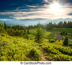 Green pine forest in mountains at sunset sky background