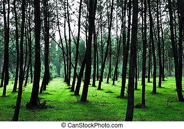 Green Pine Tree Background II