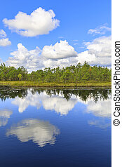 Green pine tree forest behind pond in marsh
