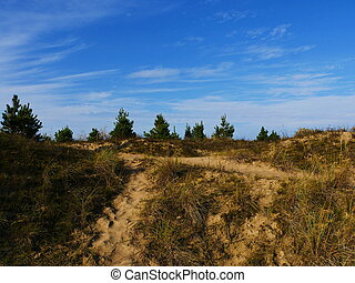 Green pine tree on blue sky
