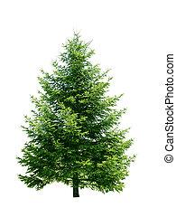 Green pine tree - Fresh pine tree isolated on white...