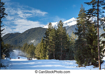 Green pine trees and white snow peak of the mountain behind