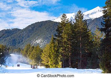 Green pine trees, white snow peak of the mountain behind