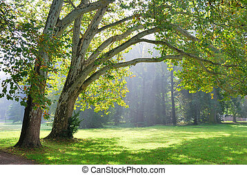 Green plane trees and sunshine rays in the background