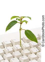 green plant and computer keyboard, concept of online learning